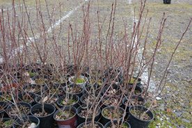 02-14-14_clean_h2o_serviceberry_j