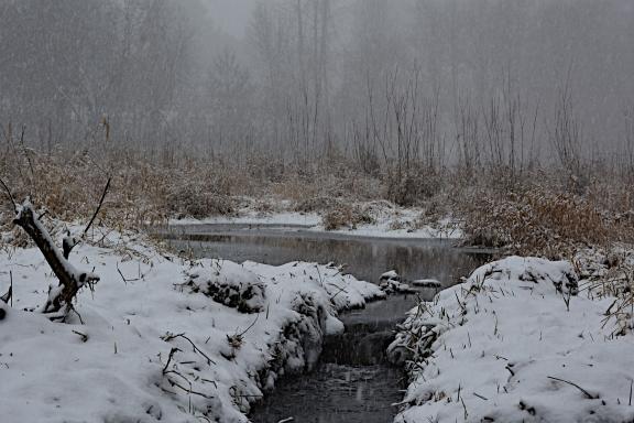 Upper pond partially frozen.