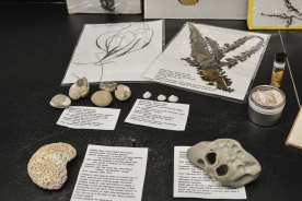 The Museum of Sandy Beaches & Dunes