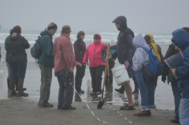 Beginning of transect site set up- measure off 100 feet starting at swash line.