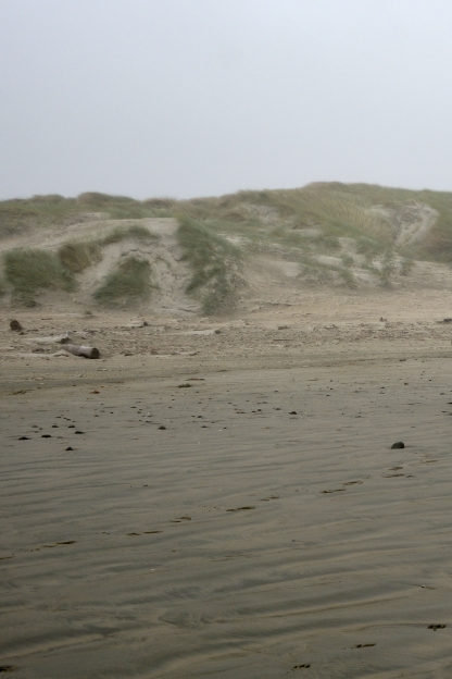 Dune-back Sandy Shore Foredunes as viewed from beach