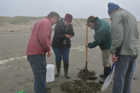 Transect hole digging