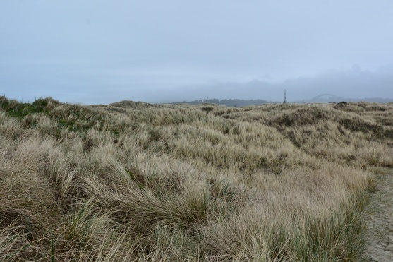 Hummocks behind foredunes. Mounds of sand piled in and around vegetation. Height: 1-several meters Generally unstable; eventually erode away.(Weidemann)