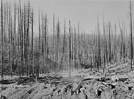 Information Description=Tillamook burn, Tillamook County, Oregon Source=Library of Congress archives at Russell Lee, Farm Security Admin. Permission=public domain