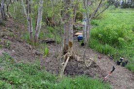 April-2014_native_plant_restoration_6