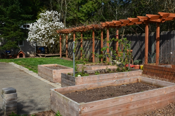 03-24-14_lan_back_garden