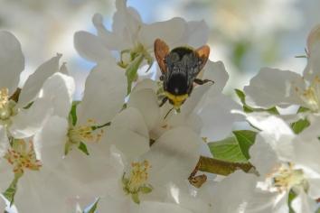 04-18-14_bumblebee