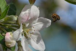 04-18-14_honeybee