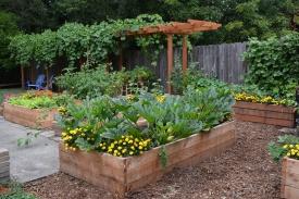 08-24-13_gar_backyard_produce