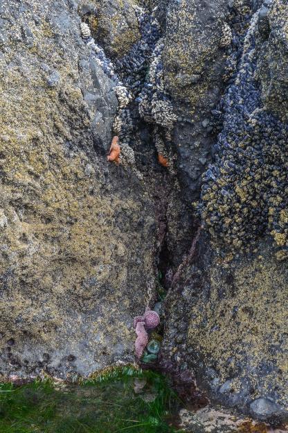 Zone 3, seascape shot