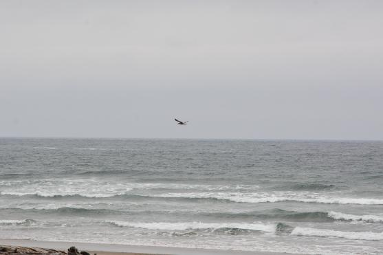 05-15-2014_beverly_beach_1