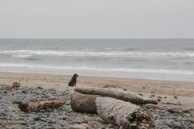 05-15-2014_beverly_beach_3
