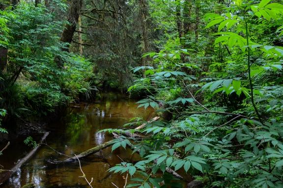 Spencer Creek
