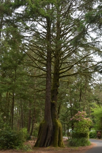 05-16-2014_t_octopus_tree_1