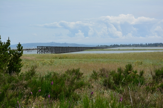 Trestle Bay- structure built by Army Corps of Engineers to haul rock by train during construction of South Jetty