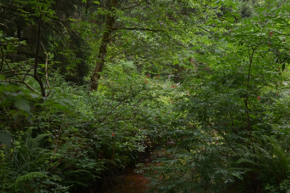 Lush shrubbery camouflages small creek