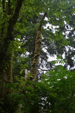 Temperate Coastal rainforest