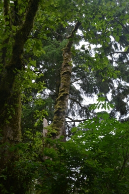 Temperate Coastal rainforest