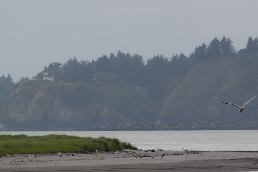 6-26-14_Cape Disappointment_1