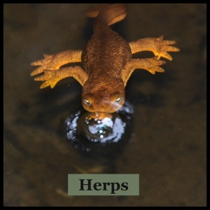 Herps