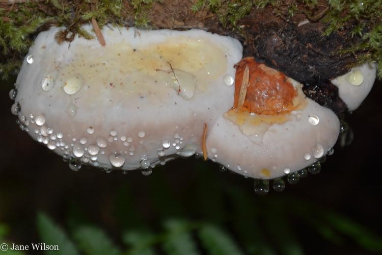 05-16-2014_fungi_4