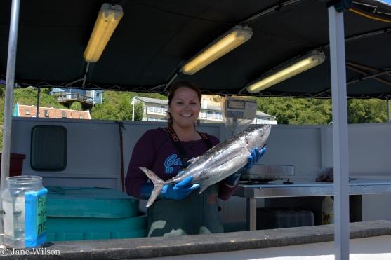 An Oregon Albacore Tuna selected,
