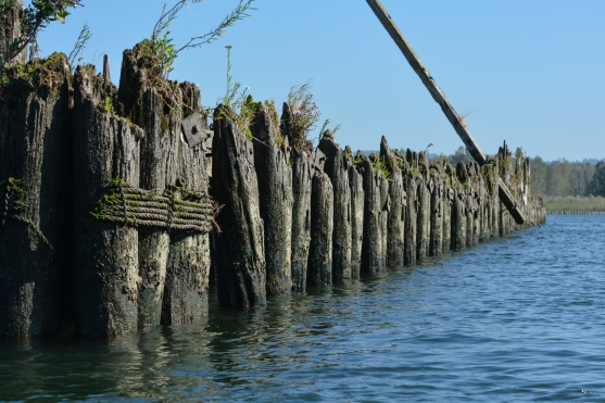 Columbia River_pilings