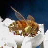 04-06-14_art_honey_bee_logo