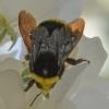 04-18-14_bumblebee_logo