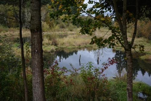 Wash.Co_Glencoe_Swale_wetlands