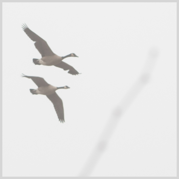 foggy_flight_2