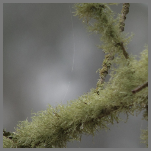 suspended-over-lichen