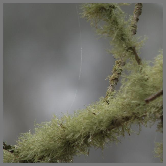 suspended-over-lichen