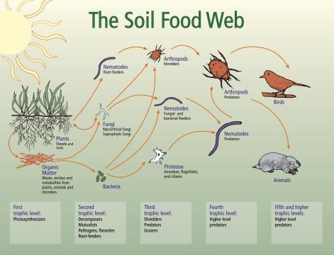 soil_food_web_NRCS