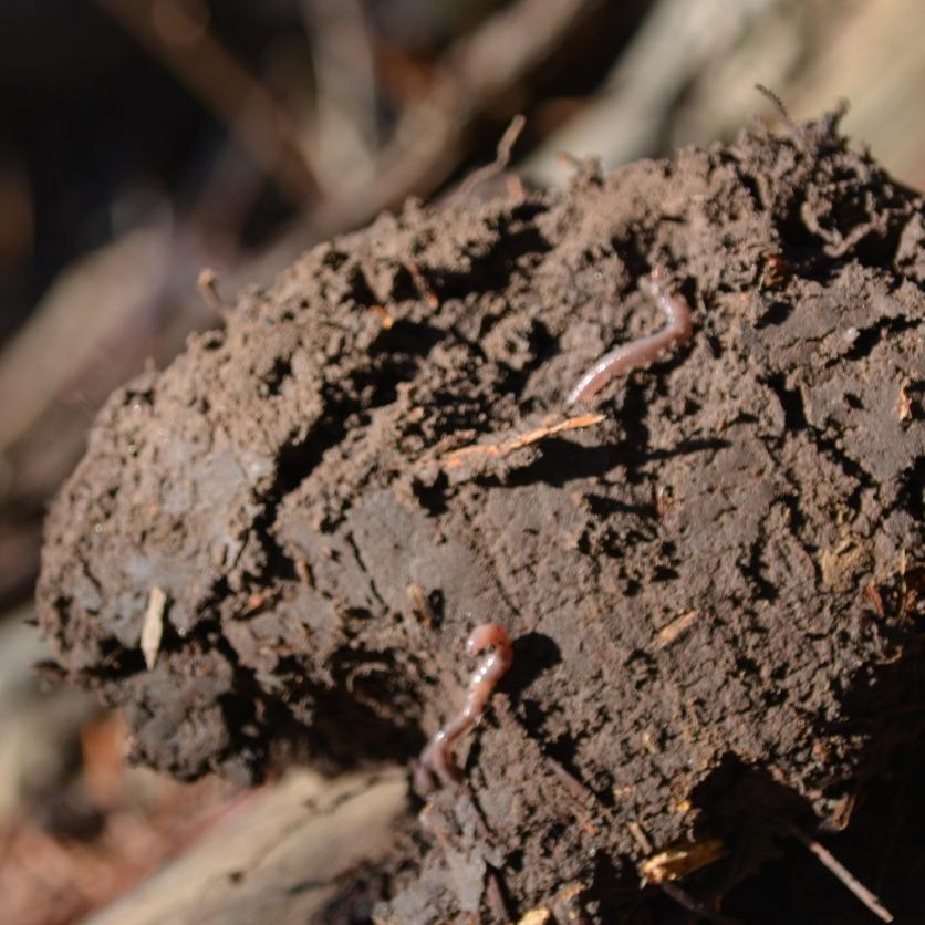 01-23-14_art_earthworm