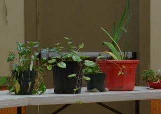 04-28-15_Weed_Watcher_workshop_3