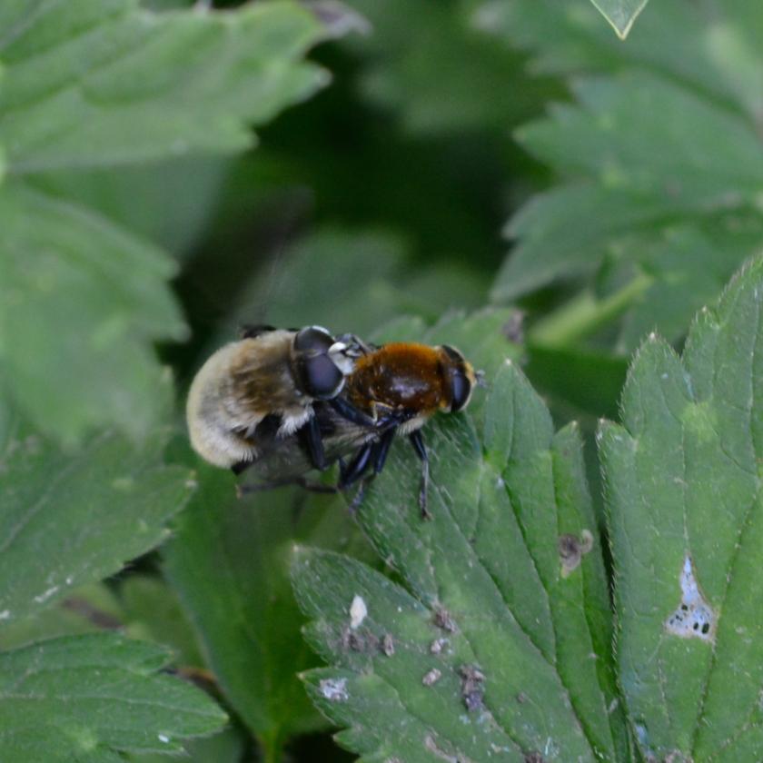 05-14-15_bumblebee_2