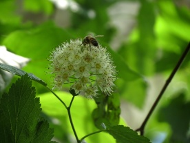 05-26-13_art_honeybee_b