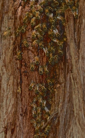 09-09-13_art_insect_honey_bee_a
