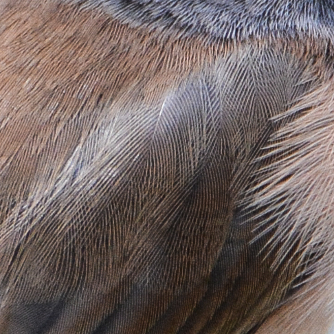 Intricate_feathers_2