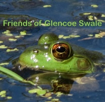07-18-13_amp_invasive_american_bullfrog_a