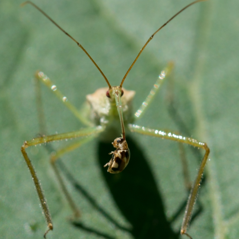 08-04-15_art_insect_assassin_bug_a