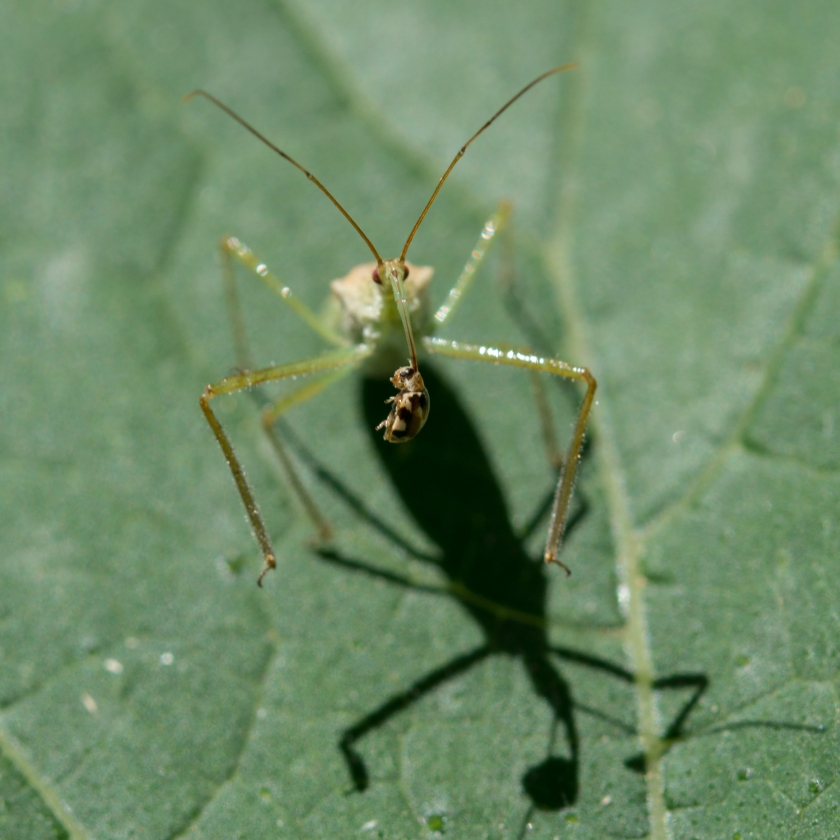 08-04-15_art_insect_assassin_bug_b