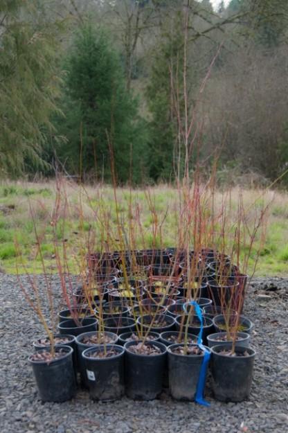 02-20-16_CWS_Plants_02