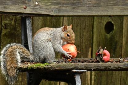 01-18-20_gray squirrel