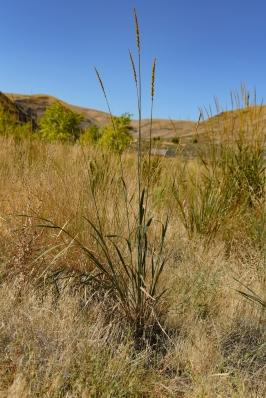 09-10-19_cottonwood_canyon_56
